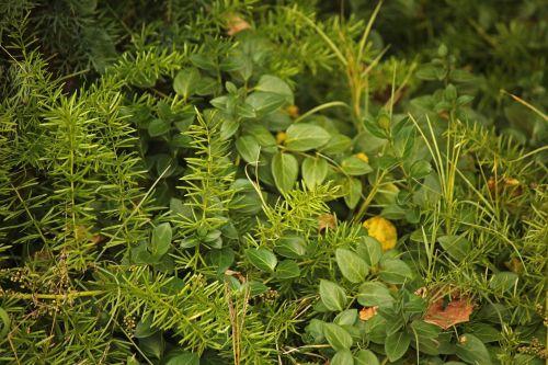 augalai, augmenija, žalias, sodas, gamta, mišri žalia augmenija sodo