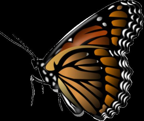 monarchas,drugelis,vabzdys,gyvūnas,nemokama vektorinė grafika
