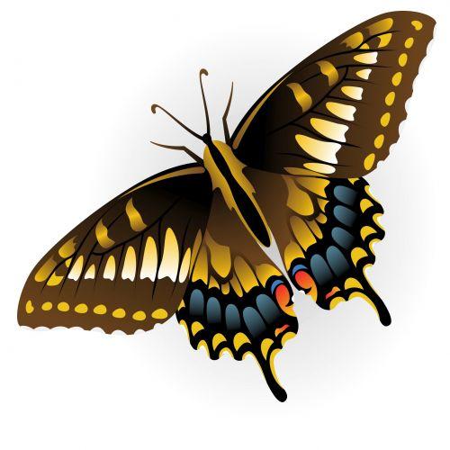 sparnas, geltona, vabzdys, skraidantis, migruojantis, izoliuota & nbsp, balta, į viršų & nbsp, peržiūra, didingas, oranžinė, grožis & nbsp, gamta, vasara, laisvė, monarchas & nbsp, drugelis, trapi, izoliuotas, šiaurė & amp, american, balta & nbsp, fonas, atverti & nbsp, sparnus, gamta, drugelis & nbsp, izoliuoti, migrantas, drugelis, monarcho drugelis