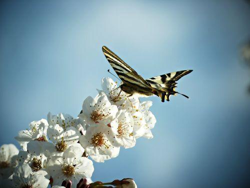 monarcho drugelis,drugelis,gėlė,nektaras,gamta,gėlės,dangus,laukas