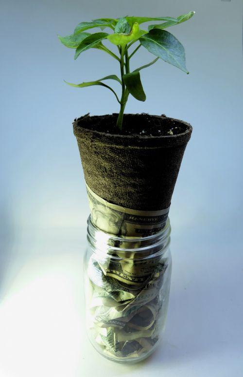 pinigai, augimas, auga, padidinti, finansai, pelnas, galia, doleriai, finansinis, statyti, saugumas, pinigų augimas