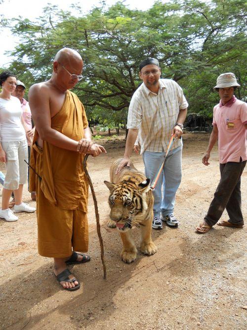 vienuolis,tigras,budizmas,budistinis,leashed,gyvūnas,naminis gyvūnėlis,turistai
