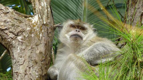 beždžionė,medis,sėdėti,Uždaryti,gyvūnas,atogrąžų