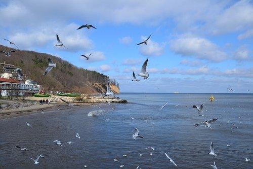 monolitinis dalis vandenyse, jūra, Krantas, papludimys, vandenynas, pobūdį, žvyro paplūdimys, šventės, akmenys, paukštis, Žuvėdra, laukinių, uolėtas paplūdimys, bangos, Gdynia, vanduo