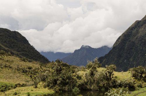 montane miškas,Perujos biologinė įvairovė,Peru amazonės biologinė įvairovė