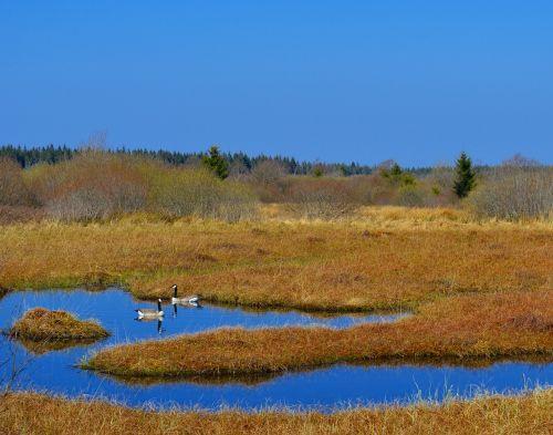kiauras,durpių pelkės,venn,aukštasis vens,gamtos apsauga,gamtos rezervatas,Belgija,kraštovaizdis,nuotaika,gamta,Nacionalinis parkas,pelkė,vienišas,platus,Moorland,pelkėtas,pelkė,drėgnas,šlapynes,pelkės,pelkė žolė,pievagrybių žolė,nendrė