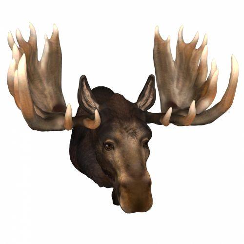 3d, piešimas, briedis, laukiniai, gyvūnas, izoliuotas, balta, fonas, didelis, šiaurinis, elnias, suplaktas, antlers, Patinas, galva, briedis