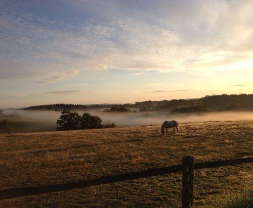 hage,saulėtekis,arklys,laukas,gamta,migla,miškas,rytas,ryto dangaus