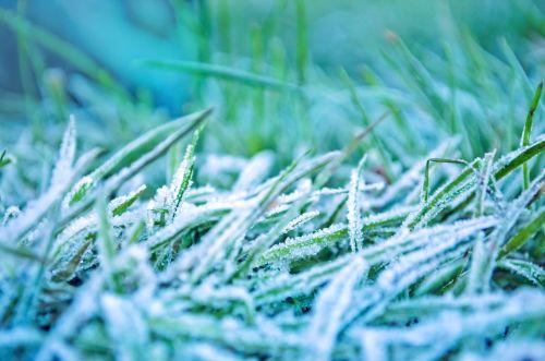 rytas, sušaldyta, žolė, sezonai, ledas, žydėti, gamta, makro, žiema, žalias, balta, fonas, šiaudai, rytas sušaldyta žolė