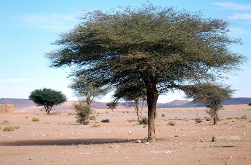 Marokas,afrika,dykuma,marroc,smėlis,soledad,taikus,kraštovaizdis,gamta,medis,menas,taika,oazė