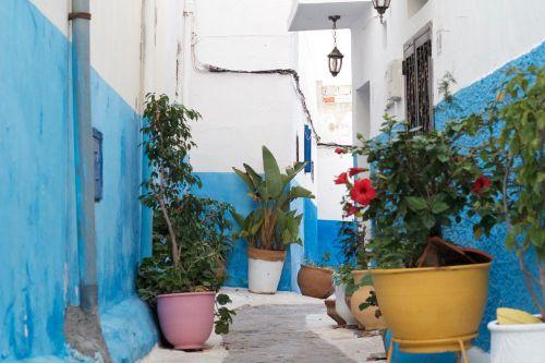 Marokas,mėlynas,kaimas,kelionė,sodas