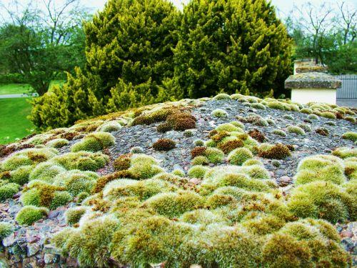 samanos,dumbliai,žalias,augimas,gamta,tekstūra,paviršius,žalia fone,gamtos abstraktumas,natūralus,augalas,aplinka,modelis,vasara,šviežias,pavasaris,dizainas,gamtos fonai,lapai,sodas,sezonas,miškas,žolė,šviežumas,žalia fone,spalva,pavasario fonas,senas,lapija,laukas,mediena,medis,medinis,samanos