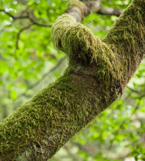 samanos,žalias,miškai,miškas,medžiai,atogrąžų miškai,augalas