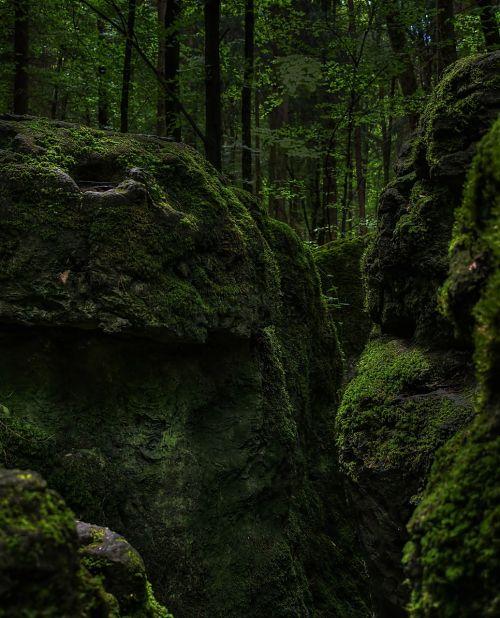 samanos,miškas,žalias,bemoost,gamta,laukiniai,pasakų miškas,magiškas miškas,druidės giraites