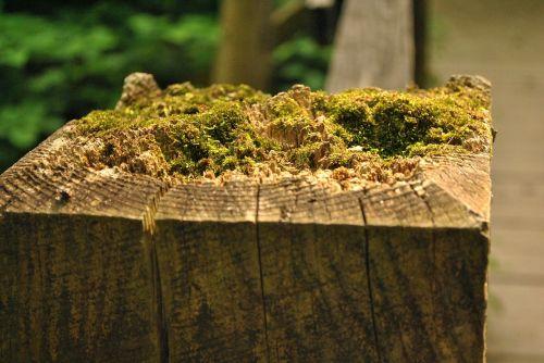 samanos,mediena,gamta,žalias,augalas,natūralus,ruda,medinis,tekstūra,mediena,senoji mediena
