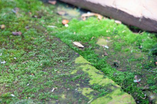 samanos, žalias, grindinis, samanos ant grindų