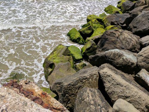 vandenynas, jūra, papludimys, kraštovaizdis, akmenys, vanduo, bangos, Rokas, gamta, samanos, samanos, žalias, augalas, jūros putos, samanos uolose