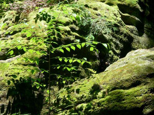 samanos, samanos, Rokas, akmenys, rieduliai, minkštas, žalias, dengimas, miškai, samanos uolos