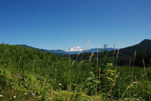 Kalnas, Kalnas, Flora, Kalnų Flora, Sniegas, Amžina, Kraštovaizdis, Gamta