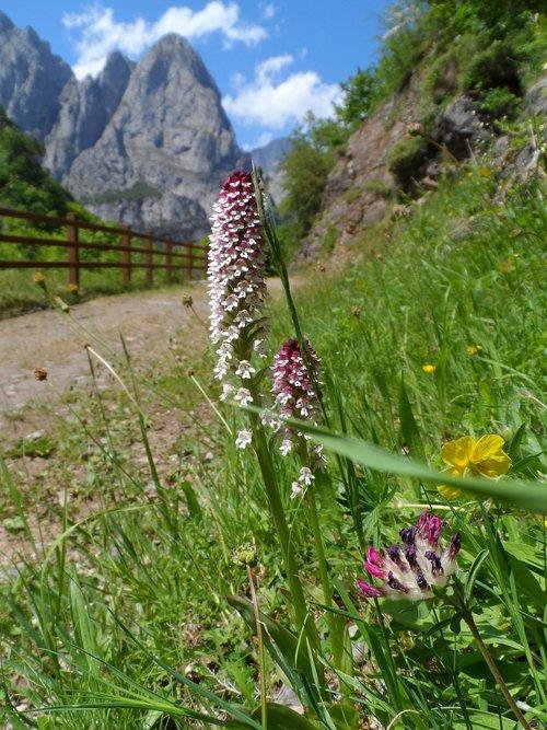kalnų, gėlė, orchidėjų, PRADO