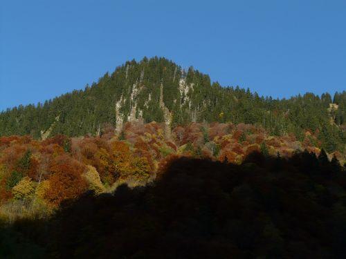 kalnas,ruduo,miškas,eglės miškas,lapuočių miškas,šešėlis,kritimo spalva,mišrus miškas,miško zonos,spygliuočių miškas,spygliuočiai,lapuočių medžiai,lapuočių mišrus miškas