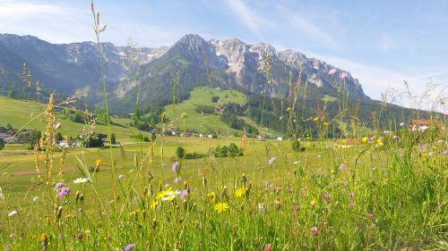 Kalnų Pieva, Pavasaris, Pieva, Gėlės, Alpių, Kalnai, Vasaros Pieva, Žolės, Kaiser Kalnai, Gėlių Pieva, Kraštovaizdis, Tyrol