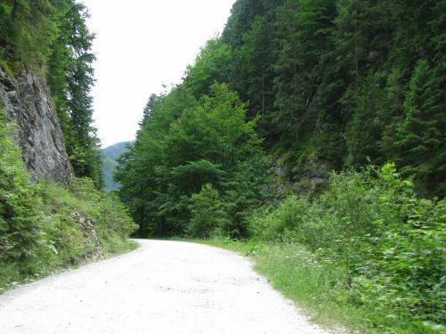 Kaimas,  Išsamiai,  Aplinka,  Miškas,  Žalias,  Vaizdas,  Kraštovaizdis,  Kalnas,  Gamta,  Optinis,  Lauke,  Kelias,  Akmenys,  Takas,  Medis,  Medžiai,  Vaizdas,  Vaikščioti,  Kalnų Takas