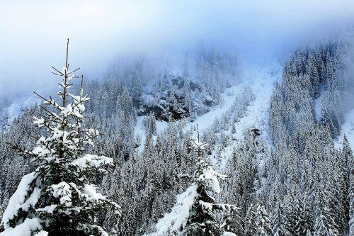 kalnai,Eglė,sniego danga medžiai,miškas,vaizdas,staigiai,balta,sniego dengtos eglės,švieži sniegas,žiemos svajonė,šaltas sezonas,kraštovaizdis,žiema,švieži nuosėdos,snieguotas kalnus,sniegas,medis,pasakos žiema,spygliuočių,gamta,spacer,vaizdingai,migla,gamtos grožis,aukštas,žygių takas,Alpės,žygiai,nuotykis,turizmas,kalnų grožis,kalnų galia,nėra žmonių