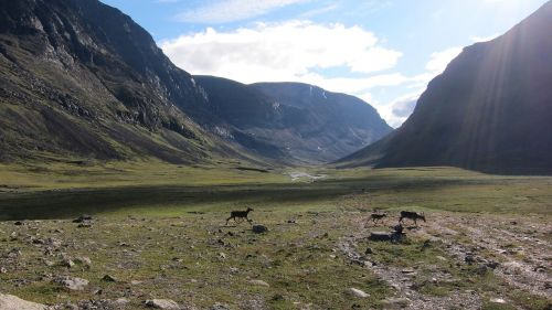 kalnai,Laplandas,Švedija,kraštovaizdis,Skandinavija,gyvūnas,šiaurės elniai,peizažas,panoraminis,nordic