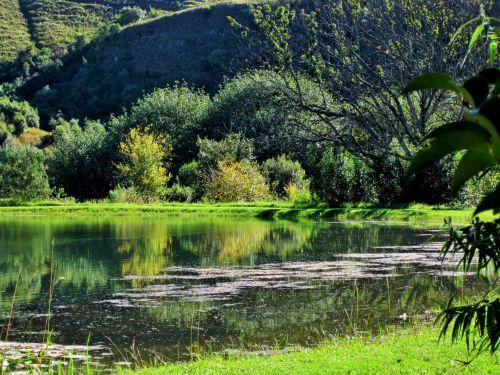 Drakensbergas, tvenkinys, vanduo, šviesus, atspindys, kalnai ir tvenkinys, drakonas smailės