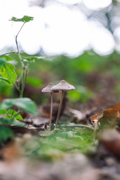 grybai,miškas,magija,gamta,grybelis,grybai,ruduo,sezonas,laukiniai,mediena,vasara,natūralus,augti,lauke,žalias,ruda,dangtelis,augalas,makro