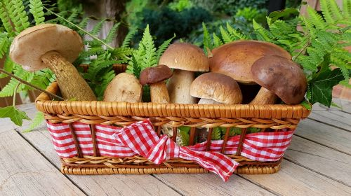 grybai,maistiniai grybai,miško grybai,krepšelis,beržiniai grybai,cep,kaštonų grybai,grybų veislės,delikatesas,natiurmortas,dekoratyvinis,pinti krepšeliai,maistas,gamta,valgomieji,kempininiai grybai