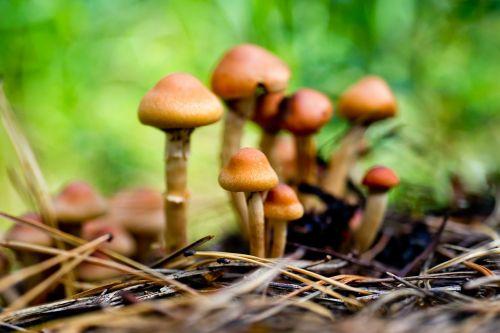 grybai,ruduo,gamta,neryškus fonas,rudens gamta,aukso ruduo,kritimo spalvos,gyvoji gamta,rudens spalvos,Siberija