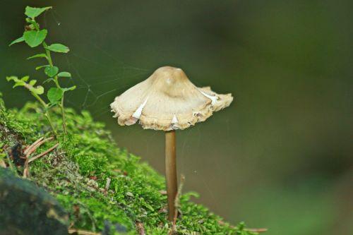grybai,miškas,ruduo,gamta,augalas,samanos,žalias,Uždaryti,makro,flora,botanika,miško augalas,miško paklotė,papartis,grybelinės rūšys,grybų laikas,miško grybai