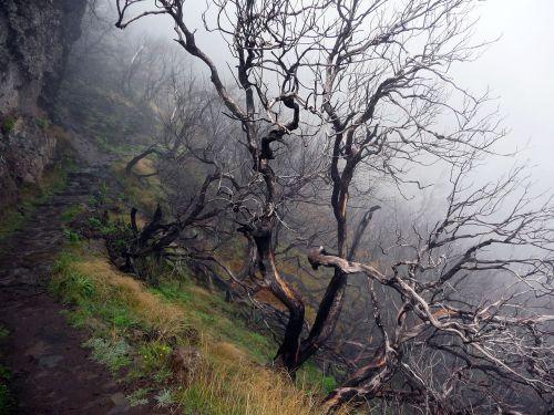 mistinis,išleistas miškas,miręs medis,mirę medžiai