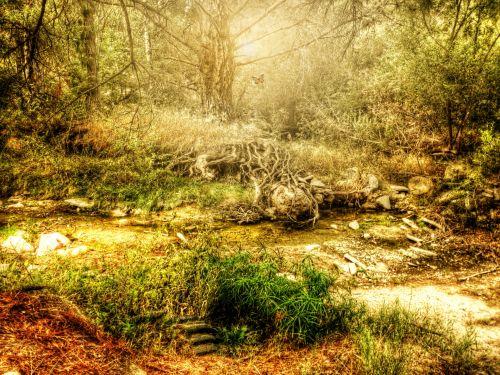 ruduo, kritimas, gamta, kaimas, srautas, medžiai, rąstai, lauke, svajingas, mistinis, mistikas, mistinis rudens srovė