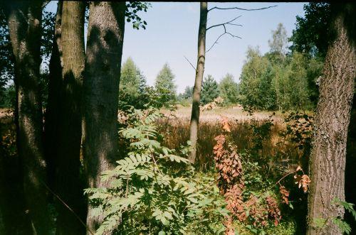 Riverside, Biłgoraj, Lenkija, upė aplink bilgorają, Lenkija
