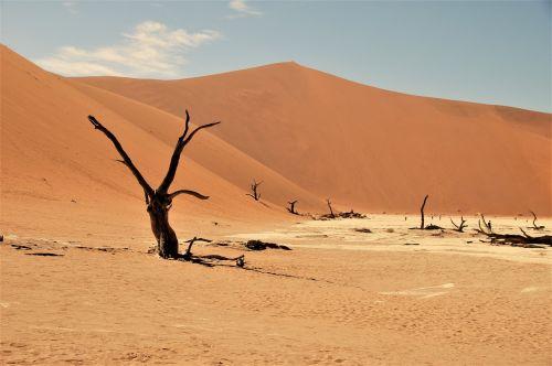 Namib dykuma,Namibija,dykuma,miręs vlei,afrika