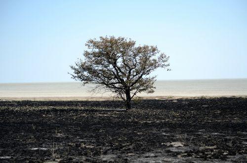 Namibija,afrika,laukinė gamta,safari,kaimas,medis,dykuma,miręs vlei,deadvlei,molio indelis,sausra,sausas,mirtis,smėlis,dangus,mėlynas,prekinis ženklas,juoda,šiluma,deginti,kontrastas,platus,šiltas,sudegino,vienatvė,atstumas,begalinis,horizontas