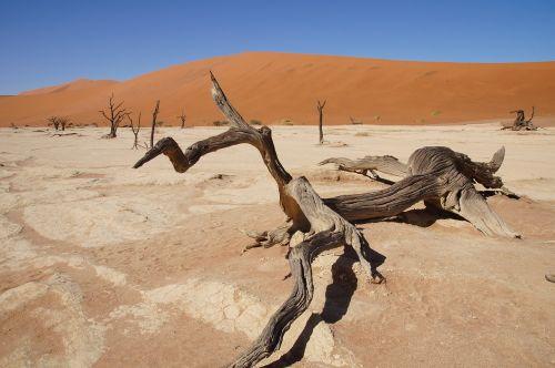 Namibija,afrika,Namib dykuma,miręs vlei,dykuma
