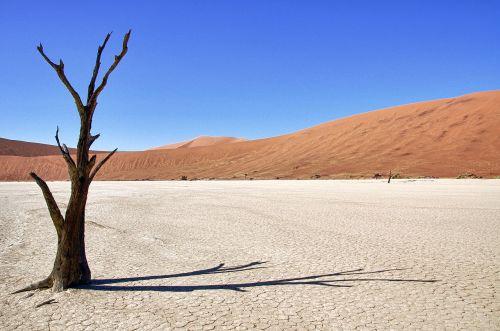 Namibija,mirtis vlei,medis,dykuma,šešėlis,sesriem