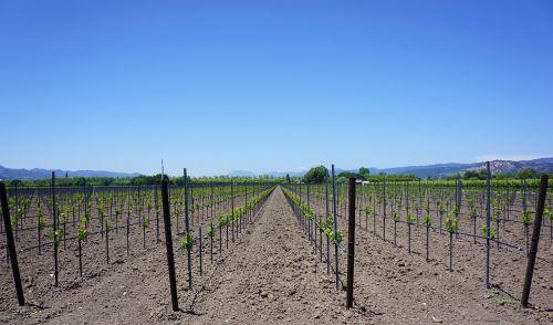 napos slėnis,vynuogynai,Kalifornija,Žemdirbystė,vyno fabrikas,gamta,vaizdingas,Vynuogė,augalas,vynas,slėnis,napa,vynmedis,ūkis,kraštovaizdis,vynuogių,pasėlių