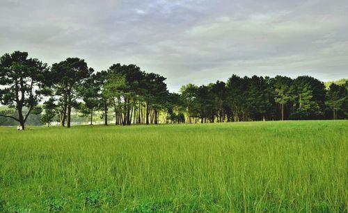 gamta,Prado,medžiai,žalias
