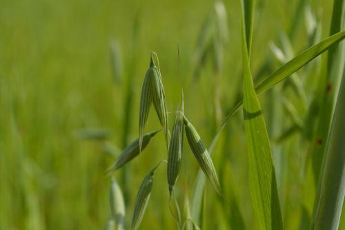 gamta,žalumos,žolė,žalia žolė,vasara,augalas,žolė pavasarį,žalias