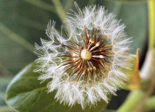 gamta,gėlė,augalas,trapumas,wildflower