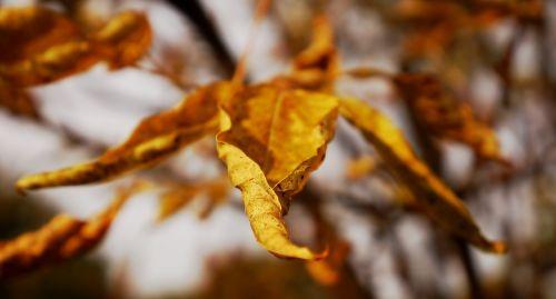 gamta,sprigas,lapai,ruduo,medis
