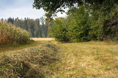gamta,šienas,medis,rudens kraštovaizdis,kraštovaizdis,laukas