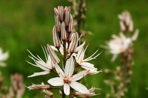 gamta,gražus,gėlė,pavasaris,raudona,balta gėlė,gėlių pavasaris,augalas,gėlių gamta,kvapas,žiedlapis,rožinis,žiūrėti gėlių,žiedlapių gėlė,pavasario gėlė,tulpine gėlė,balta,tulpė,saulėtas gėlė,gėlių saule,gėlių vaizdas,gėlių,gėlių arti šviežias,apdaila,mielas gėlė,žydėti,žiedas,sodas,šviežia gėlė,žolė,saulėtas,balta tulpine gėlė,saulės šviesa,puiki gėlė,natūralus,Kovas,spalvinga,žalias,rožė,valentine,ceremonija,puokštė,žydi,šventinis,kvepalai,egzotiškas