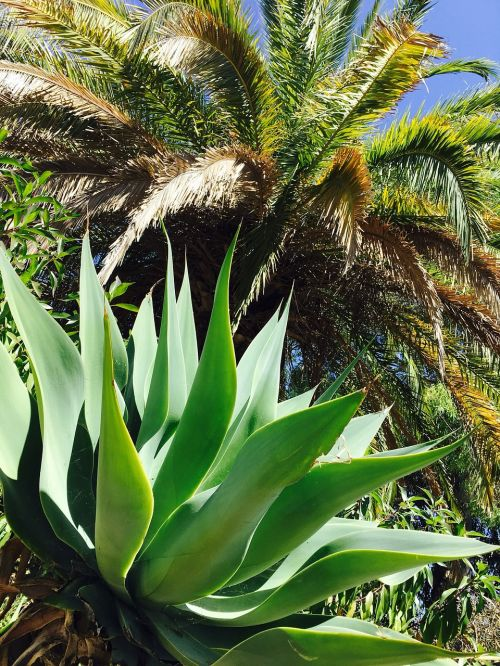 gamta,portugal,algarve,gamykla,delnas,sultingas,palmė,sultingas