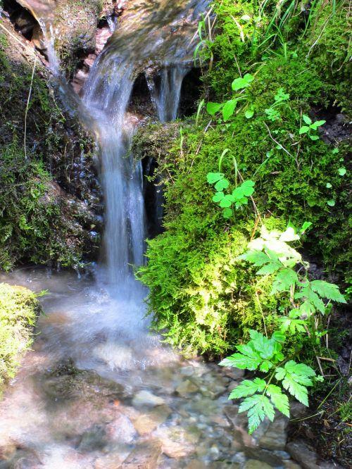 gamta,vanduo,miškas,krioklys,begantis vanduo,kraštovaizdis,srautas,žalias,Bachas,samanos,vanduo veikia